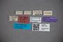 3047719 Stenus corsicus ST labels2 IN
