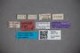 3047719 Stenus corsicus ST labels IN