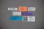 3047720 Stenus corugnaensis ST labels2 IN