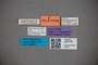 3047720 Stenus corugnaensis ST labels IN