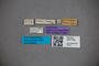 3047722 Stenus crassipes ST labels IN