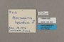 125555 Mechanitis polymnia lycidice labels IN