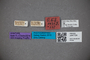 3047724 Stenus cryptophagus ST labels2 IN