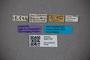 3047733 Stenus cyaneosplendens ST labels IN