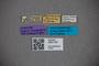 3047734 Stenus cyanescens ST labels IN