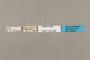 125568 Aeria eurimedia labels IN