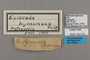 125578 Episcada hymenaea labels IN