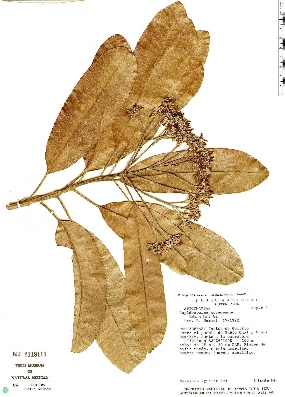 Specimen: Aspidosperma spruceanum