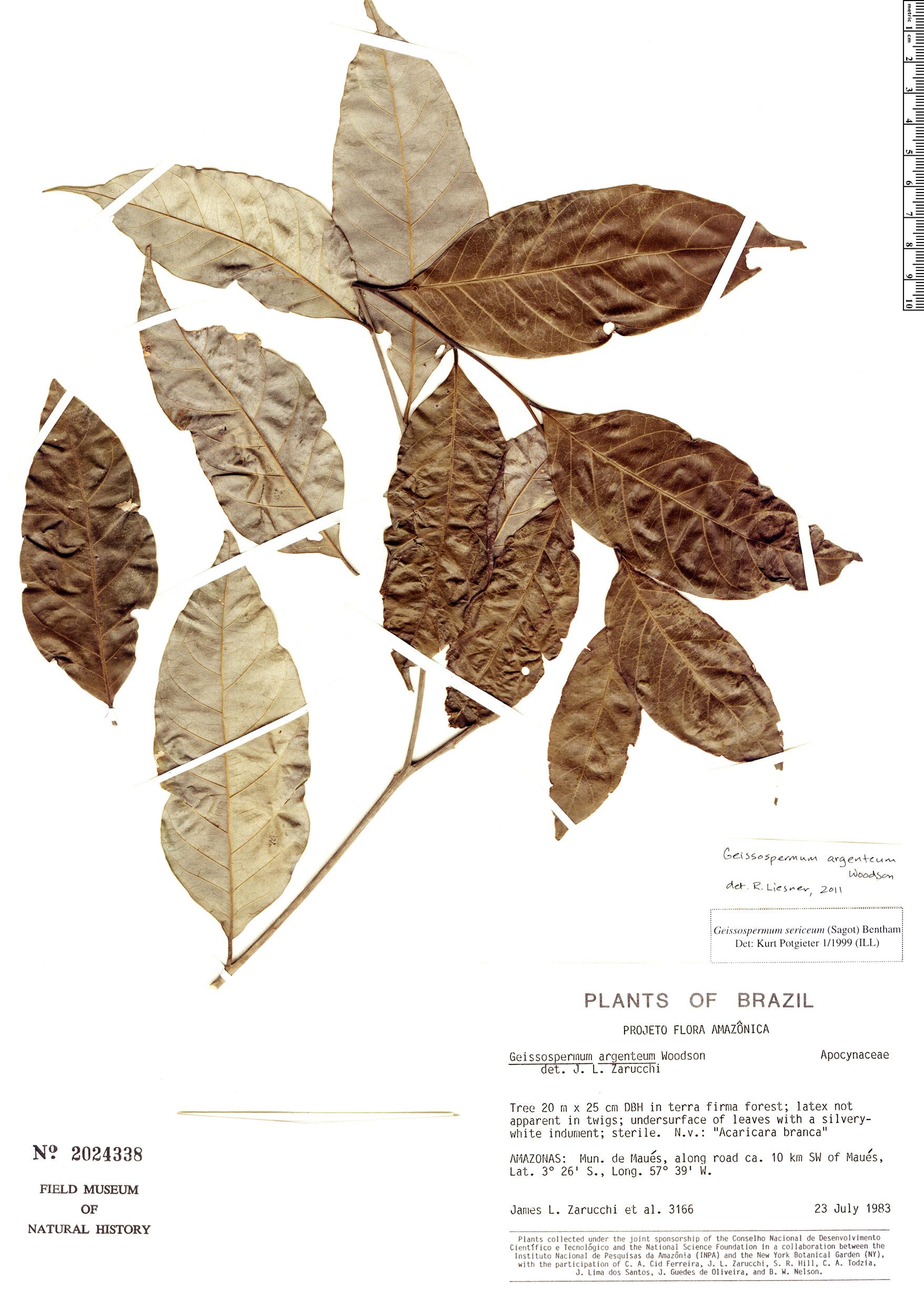 Specimen: Geissospermum argenteum