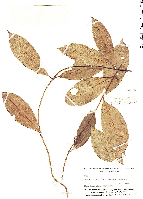 Specimen: Prestonia marginata