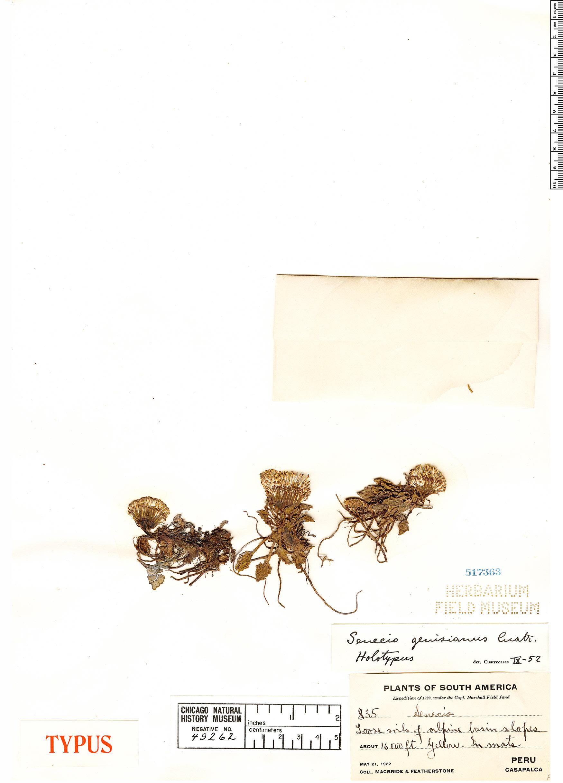 Specimen: Senecio genisianus