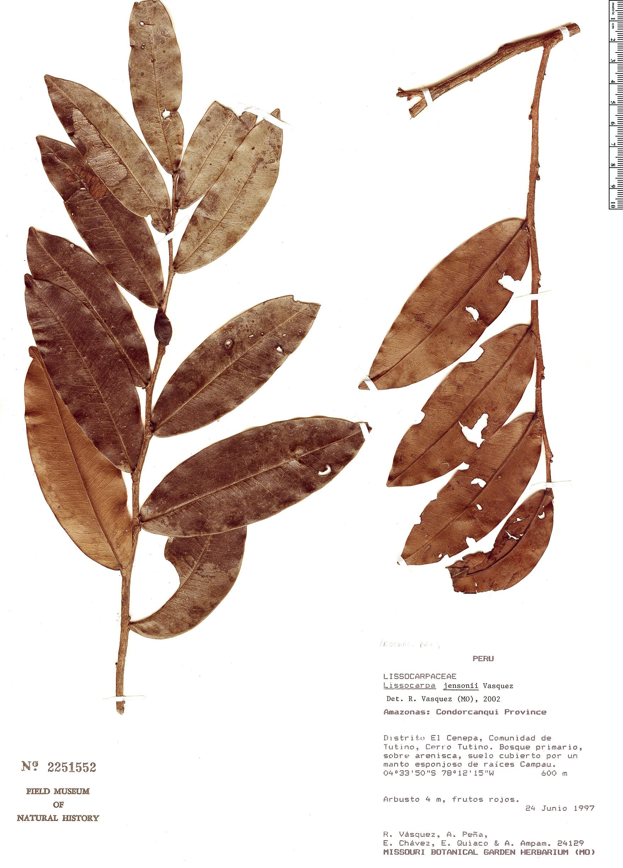 Specimen: Lissocarpa uyat