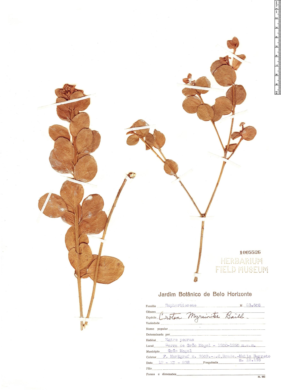 Specimen: Croton myrsinites