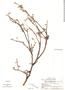EUPH F 1710557