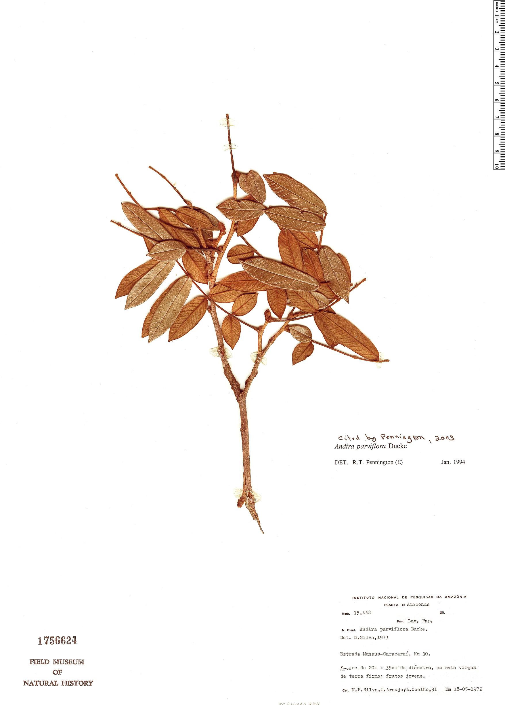 Specimen: Andira parviflora