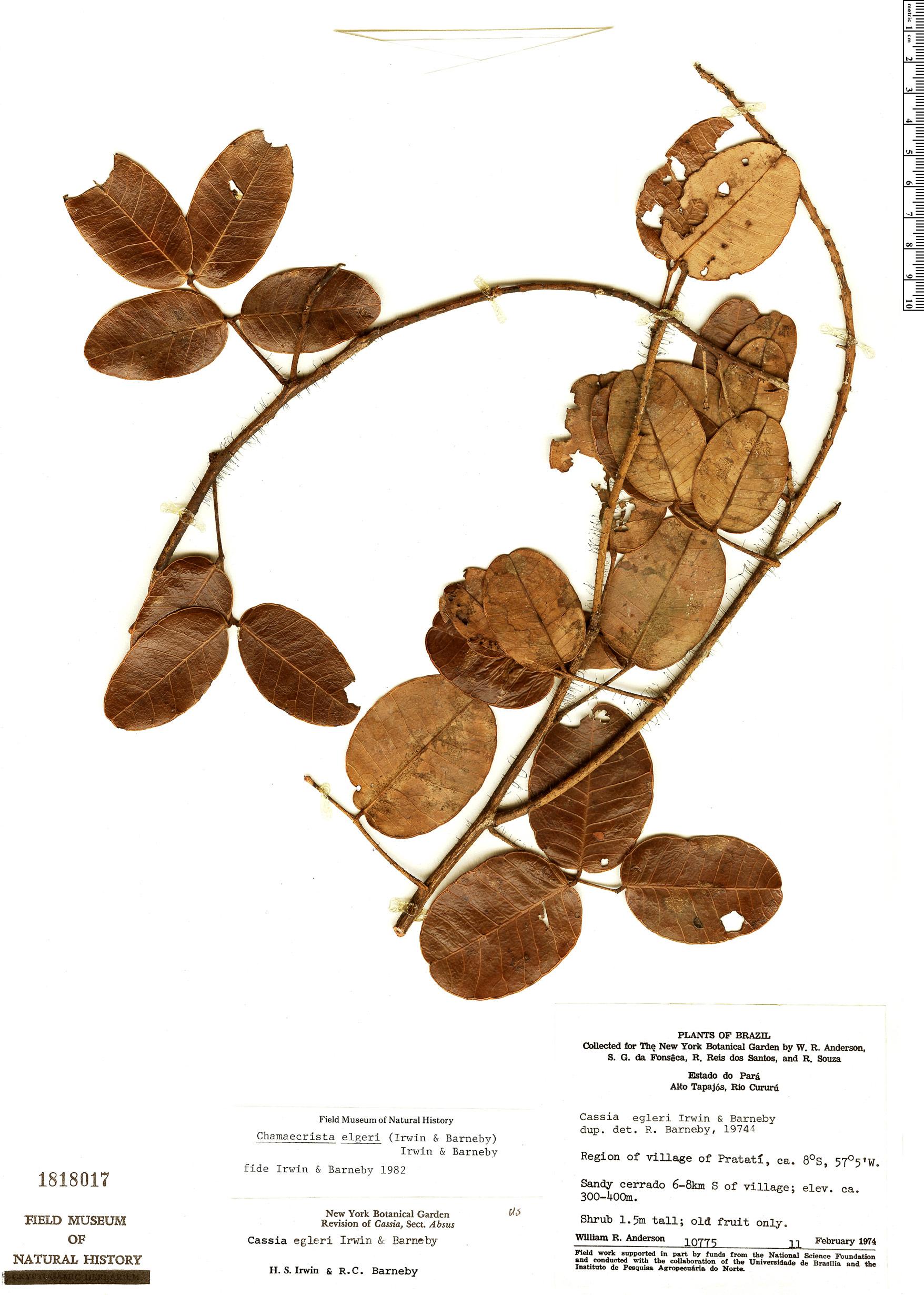 Espécime: Chamaecrista egleri