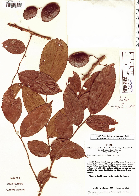 Specimen: Dalbergia simpsonii