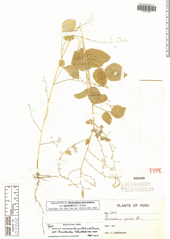 Specimen: Desmodium micranthum