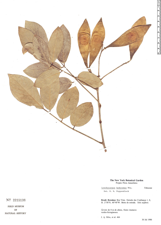 Specimen: Lonchocarpus hedyosmus