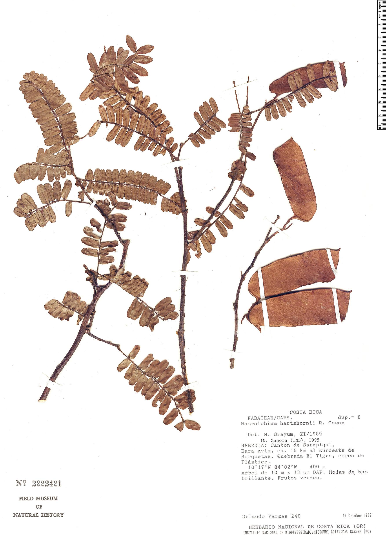Espécime: Macrolobium hartshornii