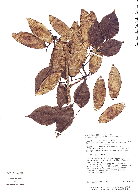 Specimen: Platymiscium parviflorum