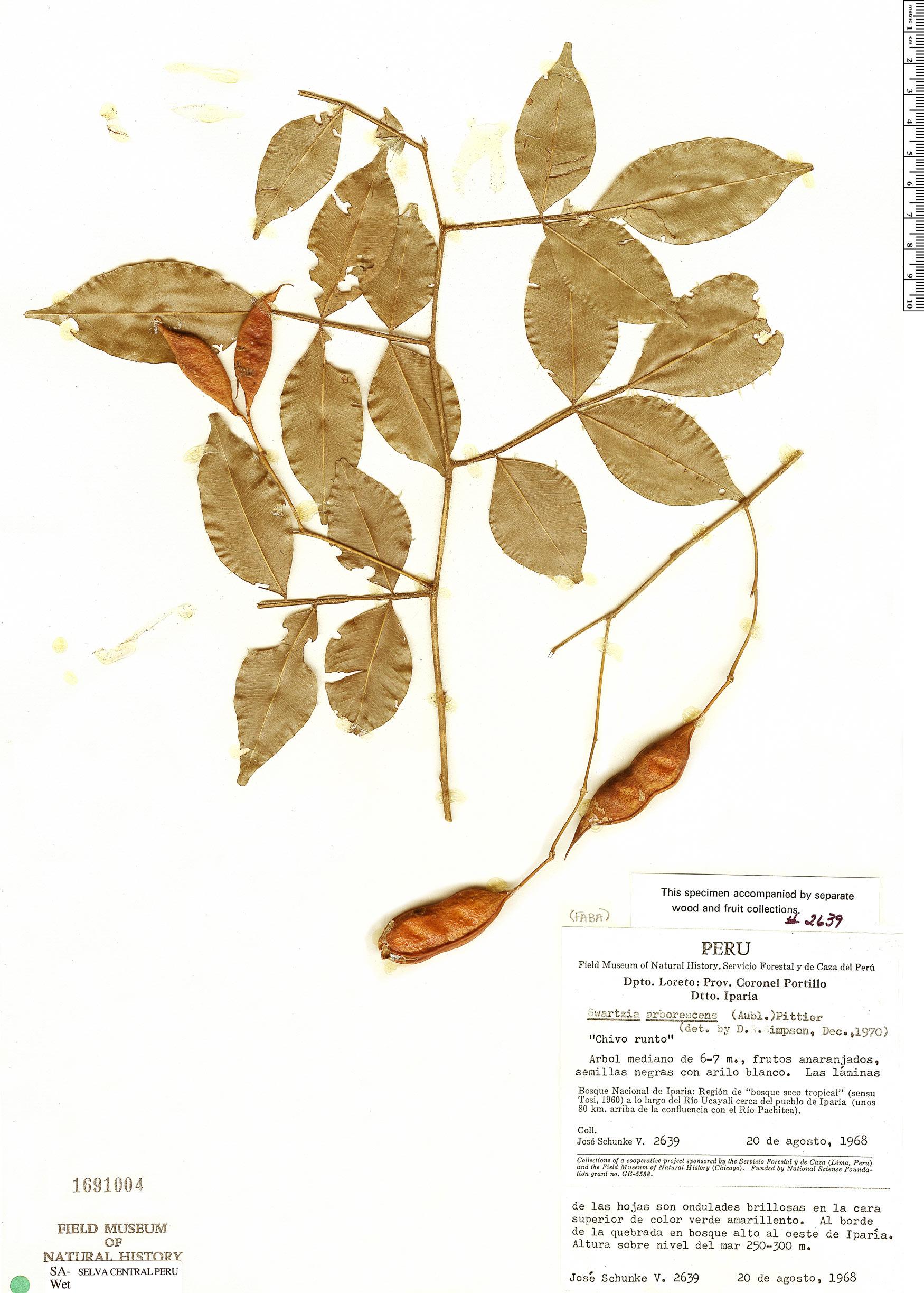 Specimen: Swartzia arborescens