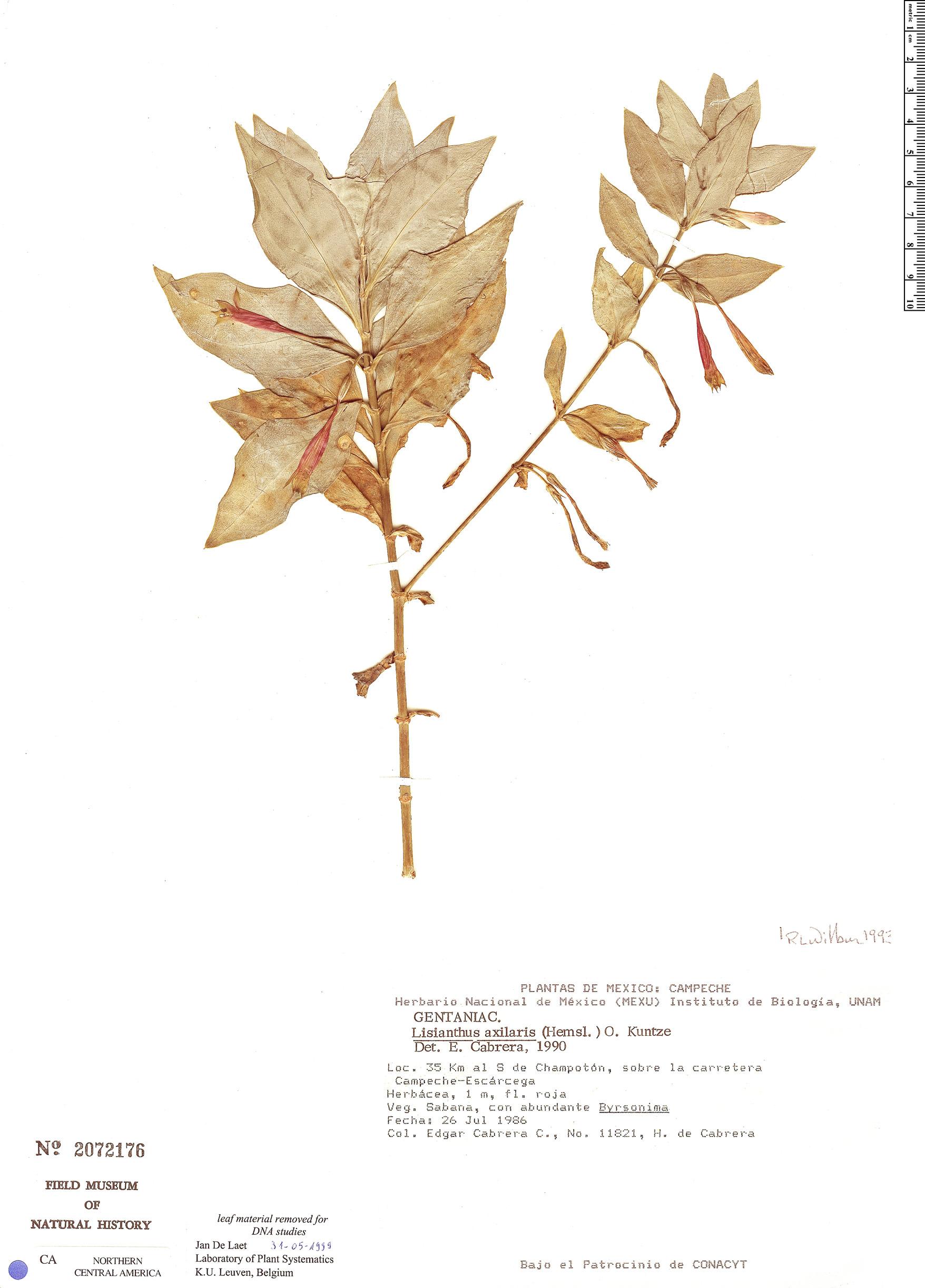 Lisianthius image