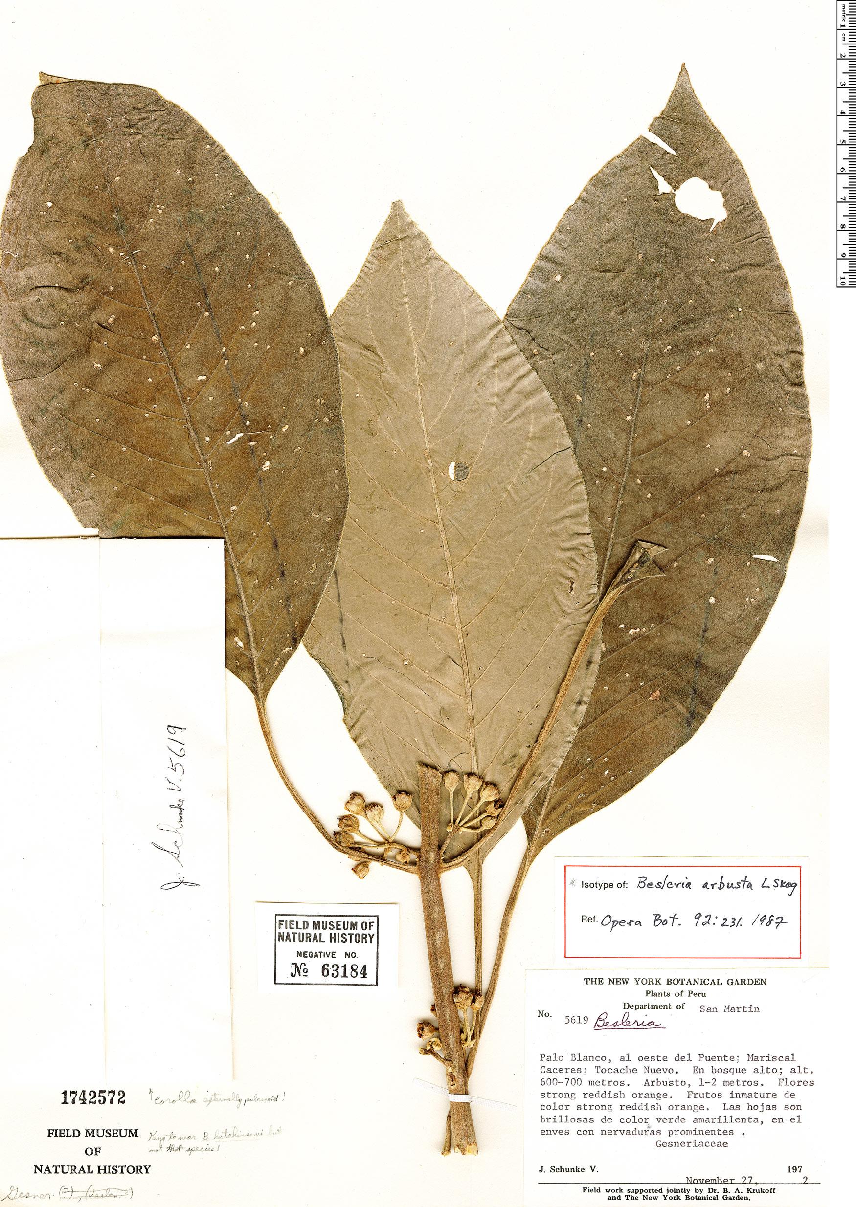 Specimen: Besleria arbusta