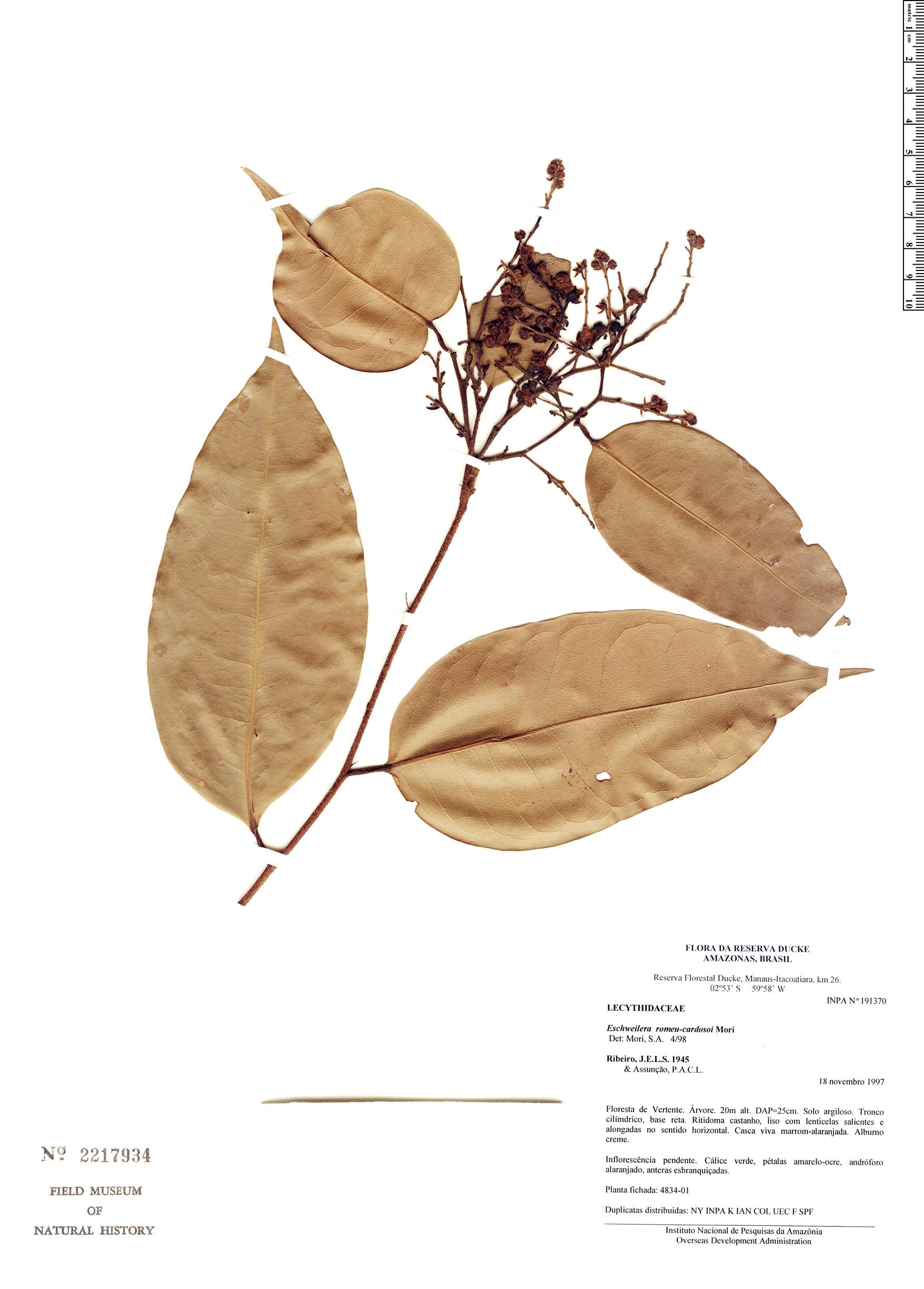 Specimen: Eschweilera romeu-cardosoi