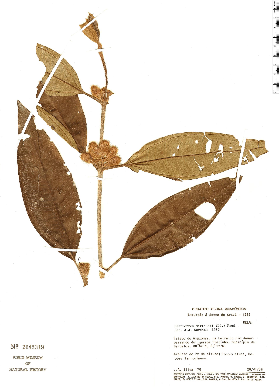 Specimen: Henriettea martii