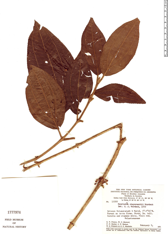 Specimen: Henriettea steyermarkii
