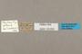 125652 Mechanitis polymnia bolivarensis labels IN