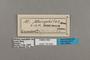 125643 Melinaea menophilus cocana labels IN
