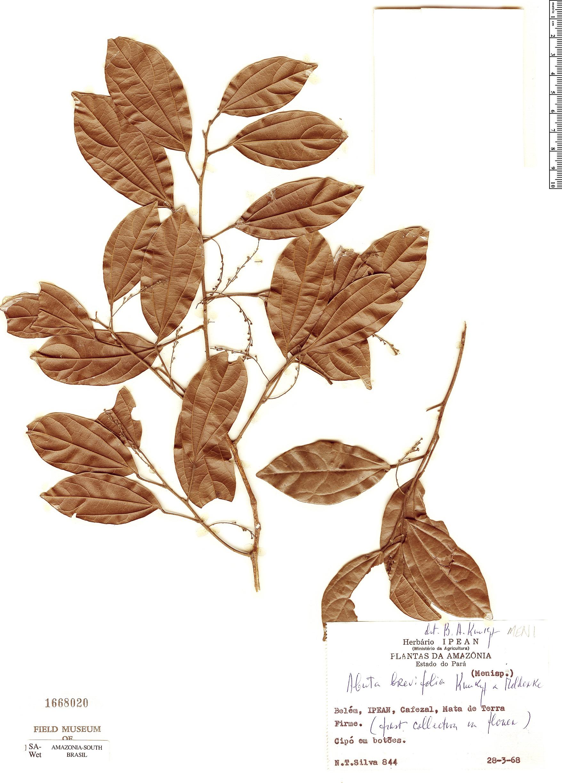 Espécimen: Abuta brevifolia