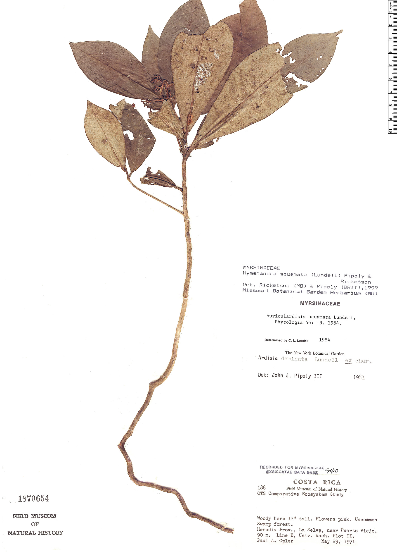 Specimen: Hymenandra squamata