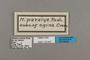 125647 Melinaea ludovica paraiya labels IN