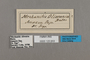 125653 Forbestra olivencia labels IN