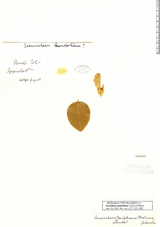 Espécime: Securidaca goudotiana