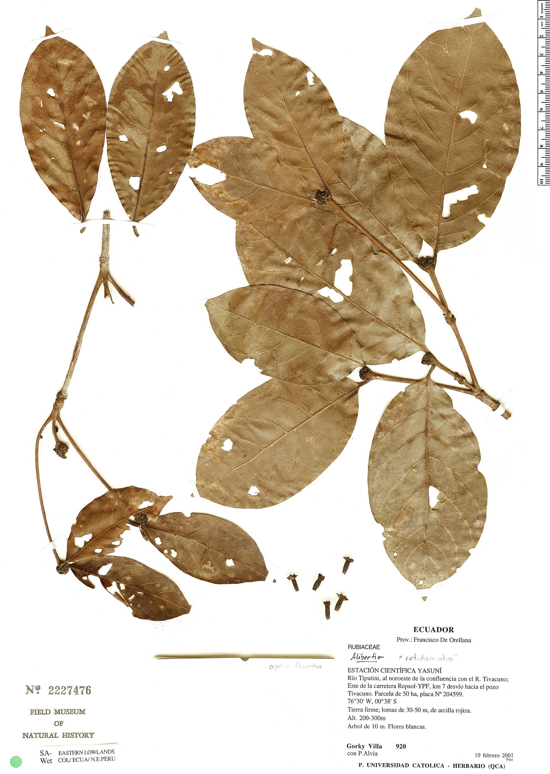 Specimen: Cordiera hadrantha