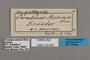 125662 Hypothyris lycaste antonia labels IN