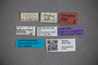 3047755 Stenus drescheri ST labels IN