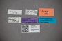 3047758 Stenus dybasi HT labels2 IN