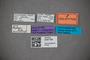 3047758 Stenus dybasi HT labels IN