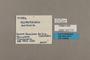 125714 Hypothyris lycaste antonia labels IN