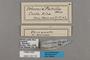 125719 Ithomia patilla labels IN