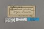 125742 Heterosais giulia labels IN