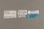 125759 Anartia amathea labels IN