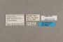 125765 Castilia perilla labels IN