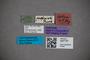 3047767 Stenus fastigialis ST labels IN