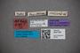 3047769 Stenus fistulosus ST labels2 IN